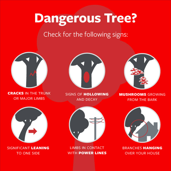 Tree Maintenance can Minimize Property Damage